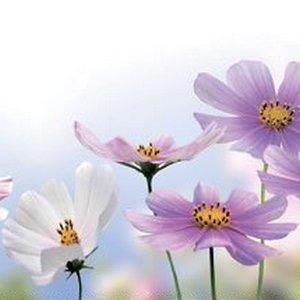 MSK Полевые цветы
