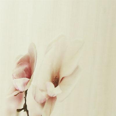 Цветы сакуры